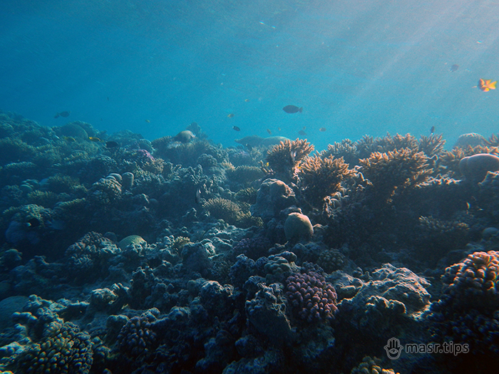 фото червоного моря