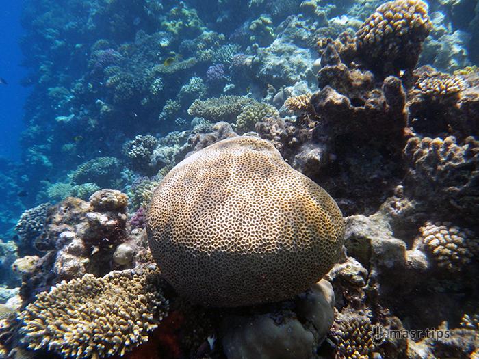 Червоне море: правила поведінки та безпеки