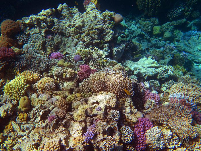 фото коралових рифів