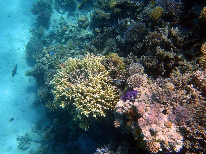 коралові рифи фото