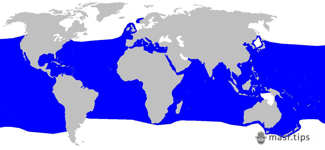 акули червоного моря