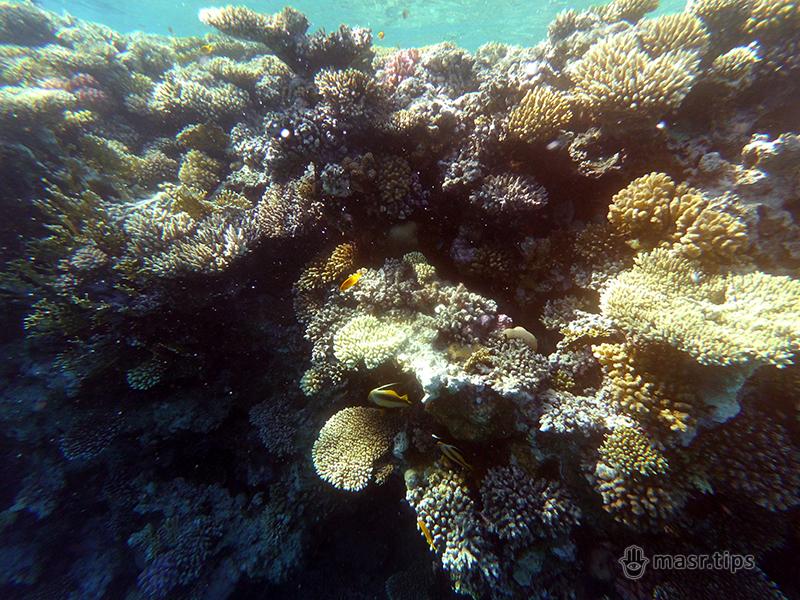 червоне море фото