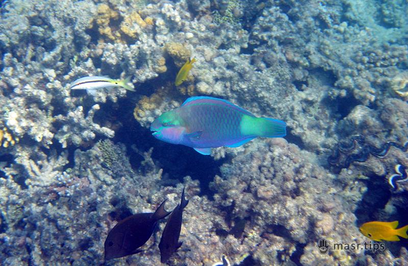 Риби-папуги: факти про яскравих риб