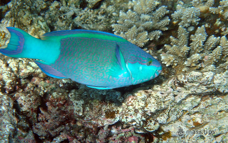 риби червоного моря