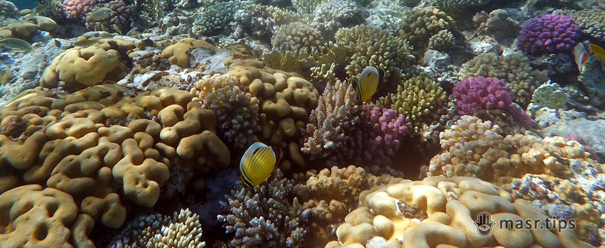 «Підводний світ Червоного моря» – застосунок для снорклерів та дайверів