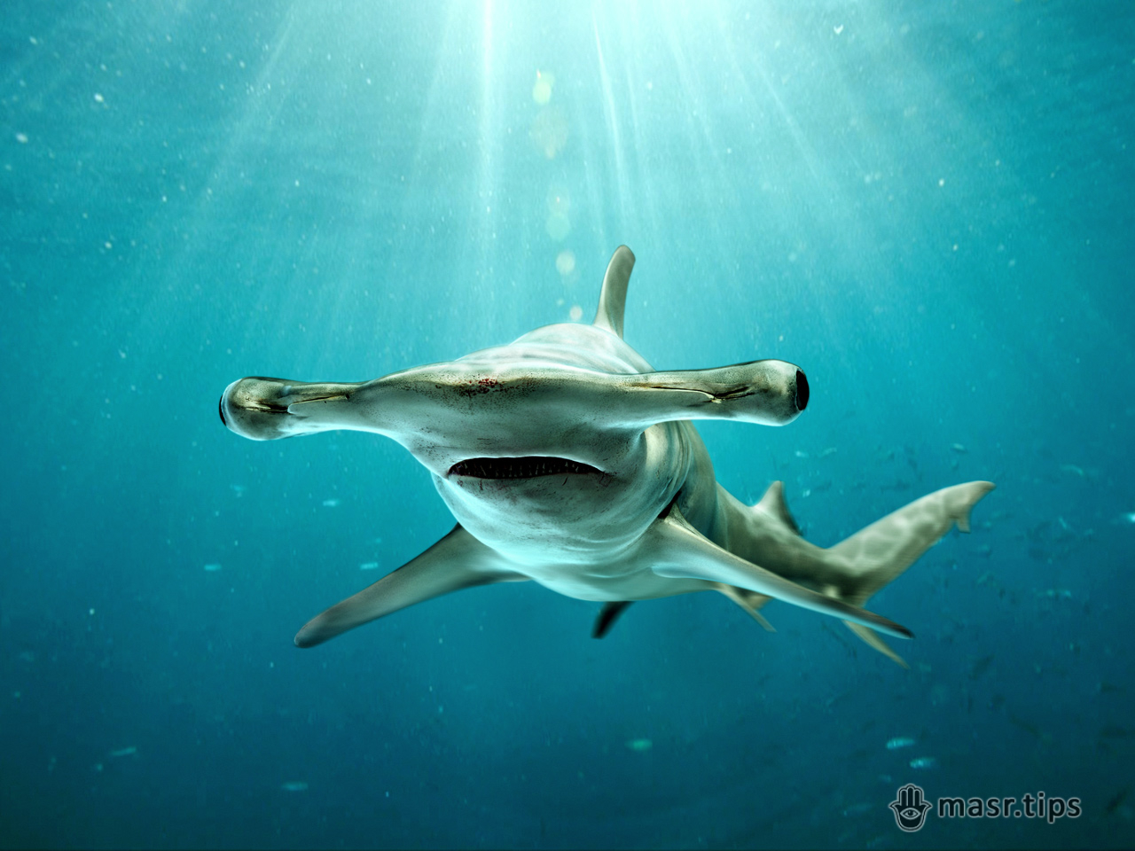 велика акула молот