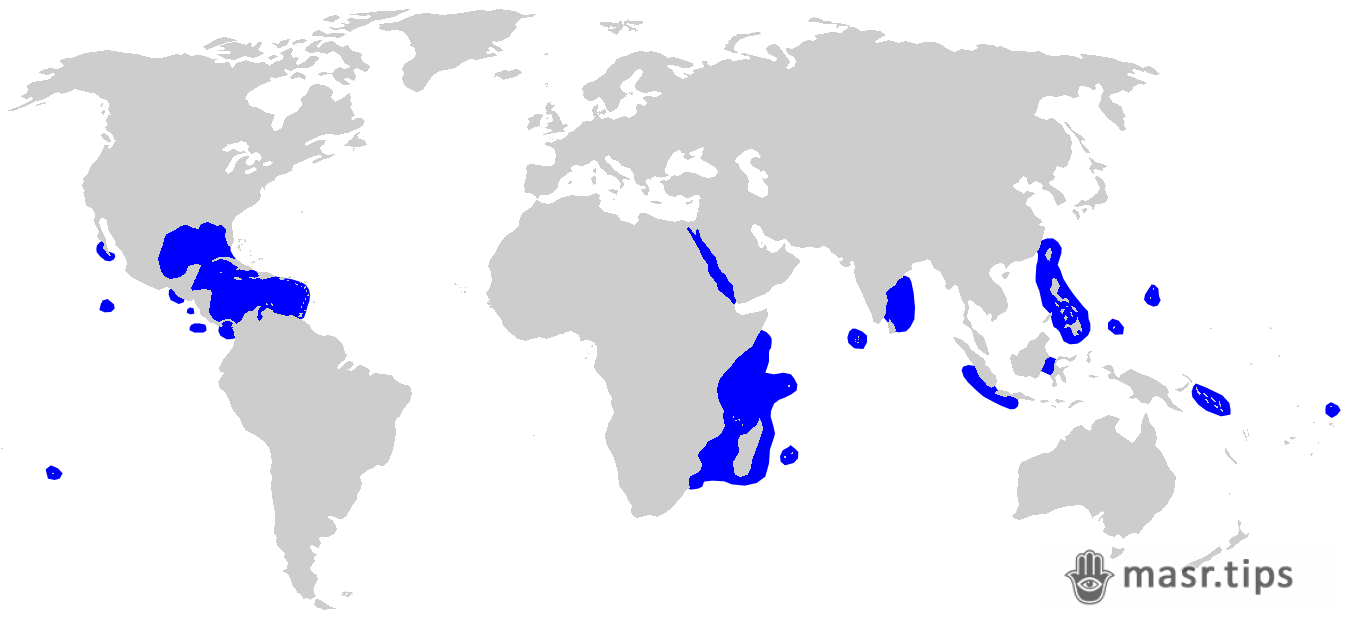 акули в червоному морі