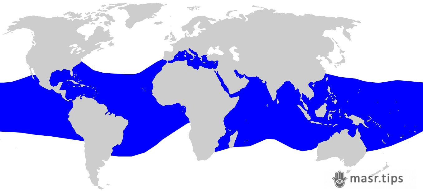 ареал розповсюдження шовкової акули