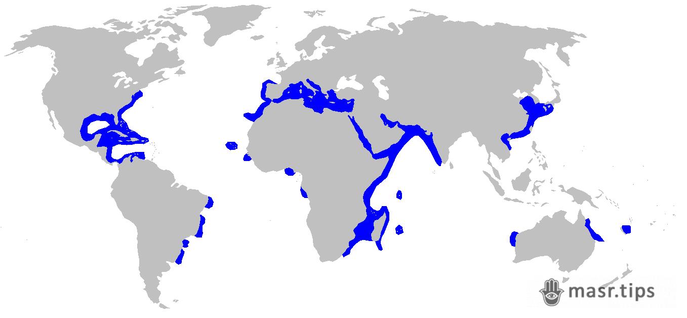 пісочна акула