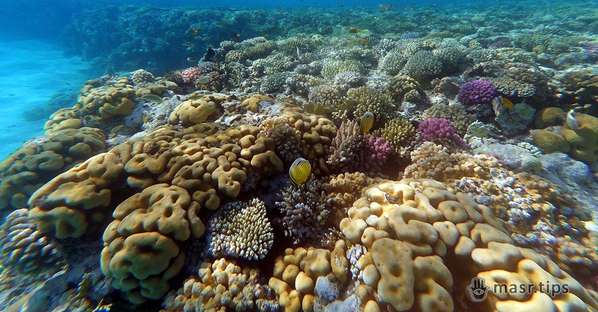 Екскурсія на острів Тиран: опис туру та поради