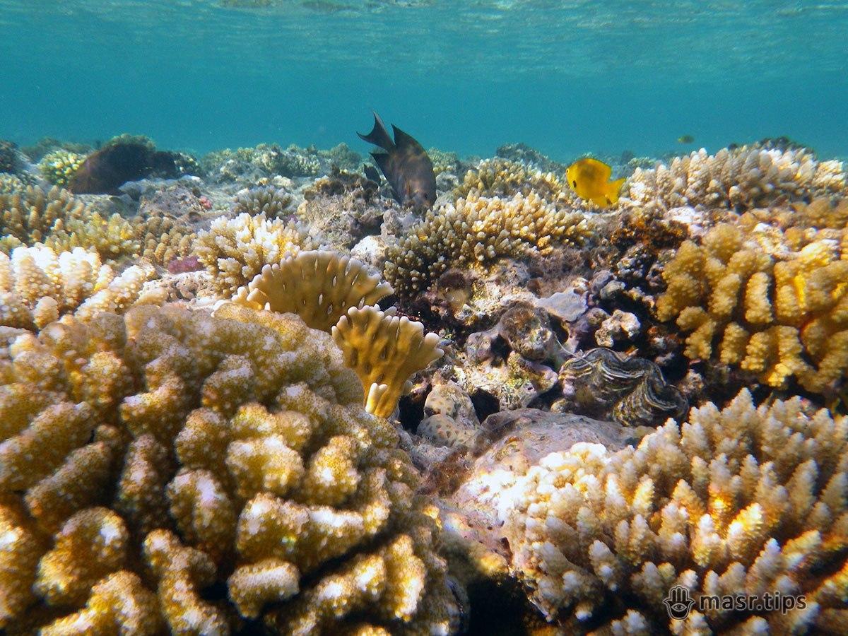 кораловий риф фото